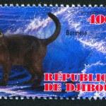 Постер, плакат: Burese cat