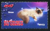 Cat Birman — Stock Photo