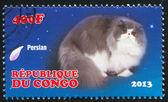 Cat persian — Stock Photo