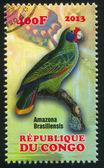 鹦鹉 amazona 树 — 图库照片