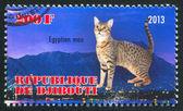 Kot egipski mau — Zdjęcie stockowe