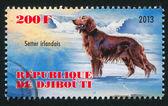 Setter irlandais dog — Stock Photo
