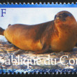Seal — Stock Photo #29675261