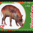 Babirusa — Stock Photo