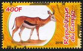 Thomson gazelle — Stock fotografie
