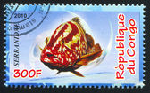 Serranidae — 图库照片