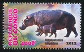 Hipopotamus — Zdjęcie stockowe
