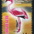 Flamingo — Stock Photo #31082493