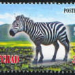 Plains zebra — Stock Photo #31082819
