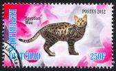 Egyptian mau cat — Fotografia Stock