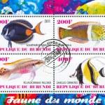Постер, плакат: Sea fish