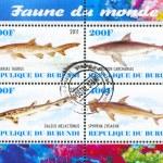 Постер, плакат: Shark