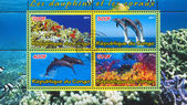 Dolphins and Corals — Stock Photo