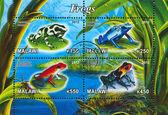 Frog — Foto Stock