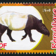 Stock Photo: MalayTapir