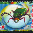 Stock Photo: Green tiger beetle
