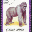Gorilla — Stock Photo #31887127