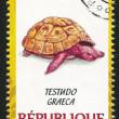 Постер, плакат: Tortoise