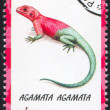 Stock Photo: Agama