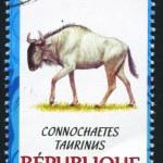 Постер, плакат: Blue gnu