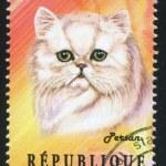 ������, ������: Persian Cat