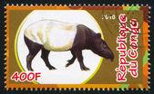 малайский тапир — Стоковое фото