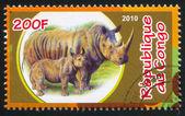 Rhinoceros — Stockfoto