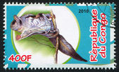 Siberian flying squirrel — Stock Photo
