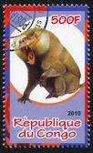 Baboon — Zdjęcie stockowe