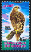 Eastern Imperial Eagle — Stock Photo