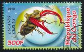 Stag beetle — Стоковое фото