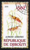 Palaemon serratus — Stock Photo
