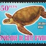 ������, ������: Sea turtle