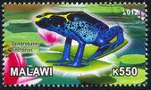 Frog — Stock fotografie