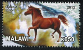 Hackney Horse — Stock Photo