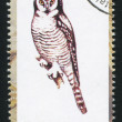Owl stamp — Stock Photo
