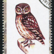 Owl stamp — Foto Stock
