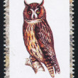 Owl stamp — Foto de Stock