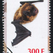timbre bat — Photo