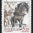 North sweden horse — Stock Photo