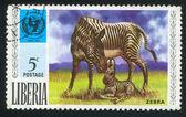 UNICEF emblem and zebra — Zdjęcie stockowe