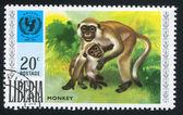 UNICEF emblem and monkey — Zdjęcie stockowe