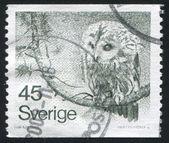 フクロウ切手 — ストック写真