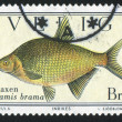 Fish Abramis brama — Stock Photo