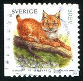 Stamp Lynx — Stockfoto