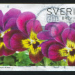Three Pansies — Stock Photo