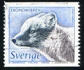 Raposa do ártico — Foto Stock