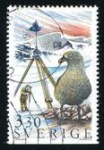 Surveying and albatross — Stock Photo