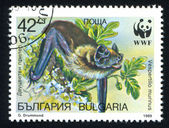 Bulgaria bat — Stock fotografie