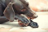 Cão e bola — Fotografia Stock